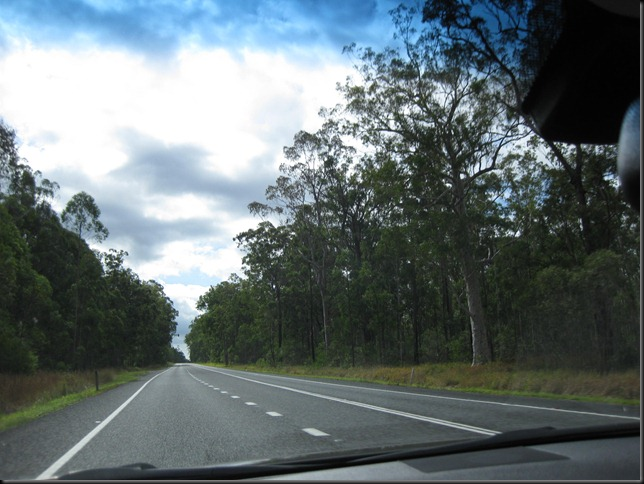 Aussie roadtrip 9 gum tree forests northern NSW