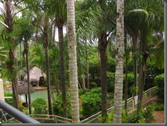 a view from our balcony breakfree noosa (8)