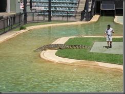 Australia Zoo crocaseum 114 (11)