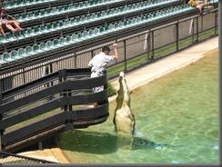 Australia Zoo crocaseum 114 (9)