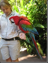 Australia Zoo Macaw