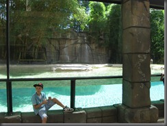 Australia Zoocat enclosure pool  122