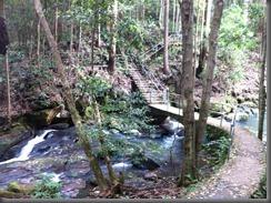 Kondalilla Falls  (2)