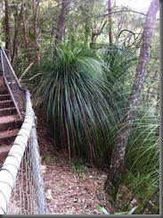 Kondalilla Falls along the track (14)