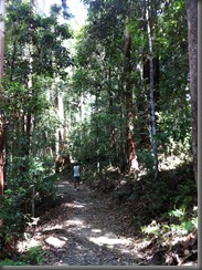 Kondalilla Falls along the track (3)