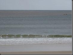 Noosa main beach (8)