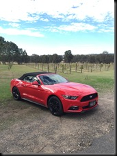 Mustang Hunter Valley (19)